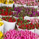 Цветы на Садоводе
