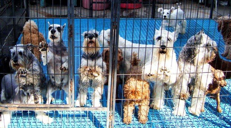 Собаки на птичьем рынке Садовода